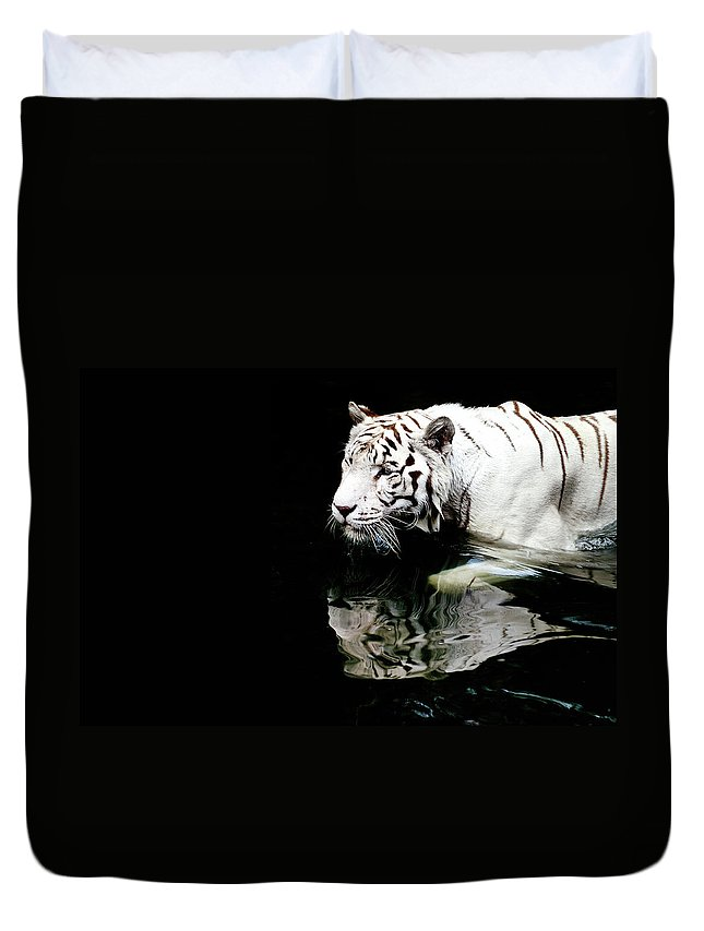 Three Quarter Length Duvet Cover featuring the photograph White Tiger In Water by Carlina Teteris