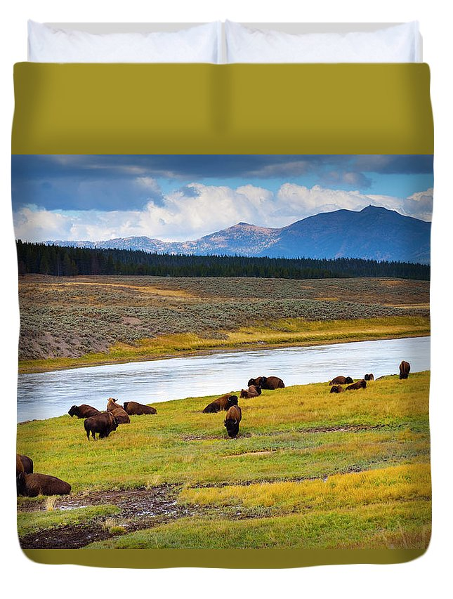 Scenics Duvet Cover featuring the photograph Wild Bison Roam Free Beneath Mountains by Jamesbrey