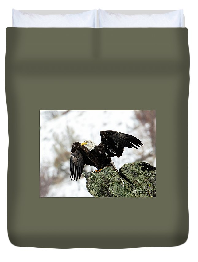 Bald Eagle Duvet Cover featuring the photograph Wings Out by Mike Dawson