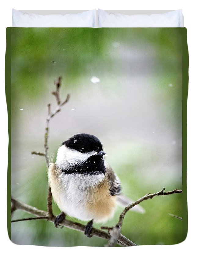 Chickadee Duvet Cover featuring the photograph Winter Black Capped Chickadee by Christina Rollo