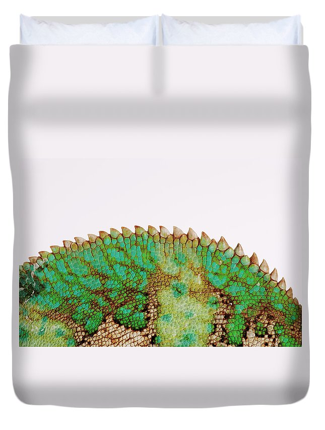White Background Duvet Cover featuring the photograph Yemen Chameleon, Close-up Of Skin by Martin Harvey