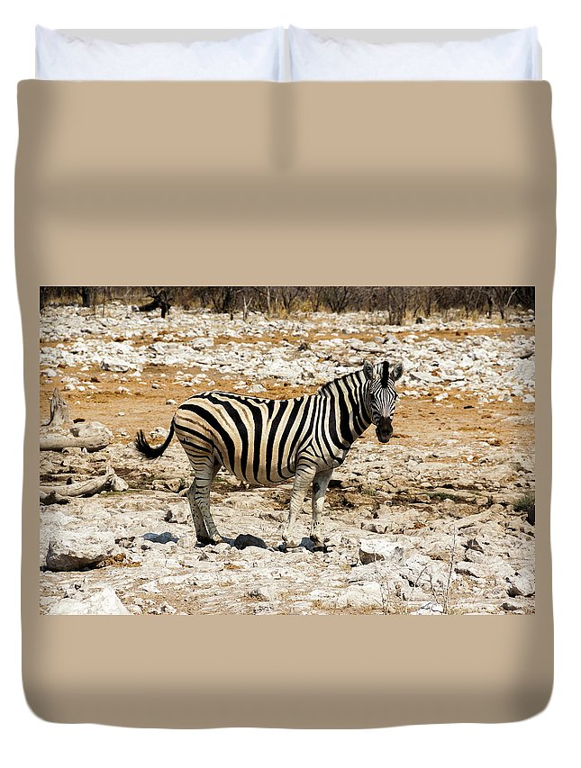 Animal Themes Duvet Cover featuring the photograph Zebra And White Rocks by Taken By Chrbhm