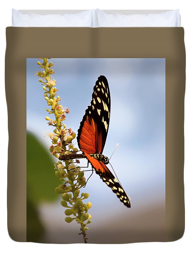 Tiger-longwing Duvet Cover featuring the photograph Whispering of butterfly wings 3 by Jaroslav Buna