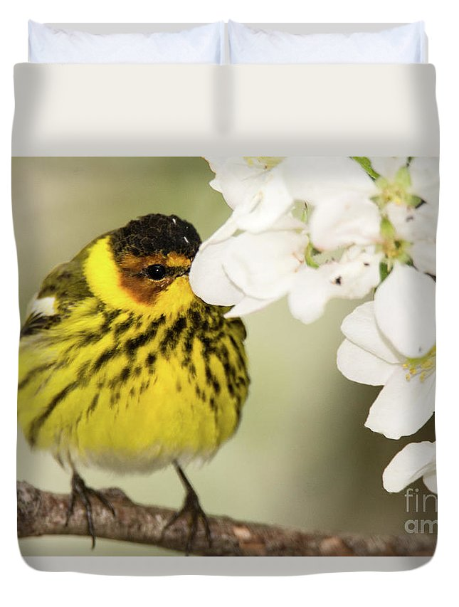 Warbler Duvet Cover featuring the photograph I See You by Gaby Swanson