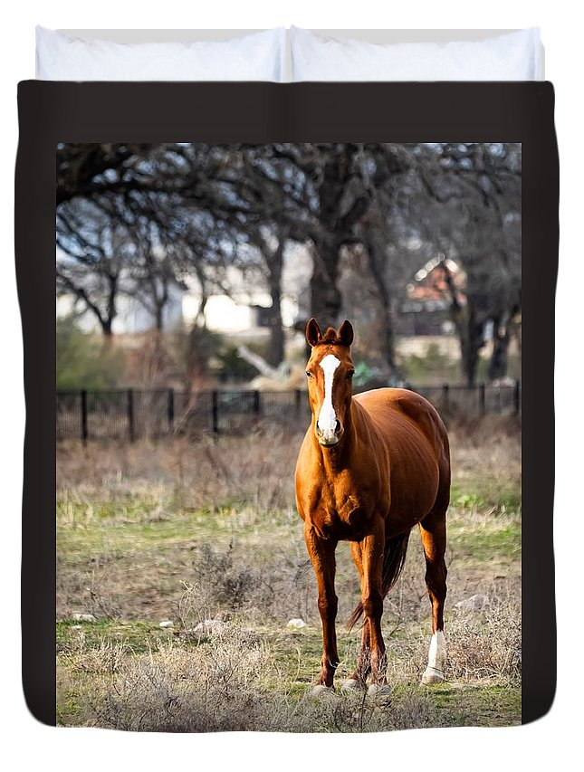 Horse Duvet Cover featuring the photograph Bay Horse 3 by C Winslow Shafer