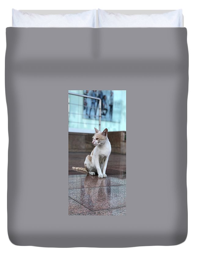 Wallpaper Duvet Cover featuring the photograph Cat Sitting On Marble Floor by Prashant Dalal