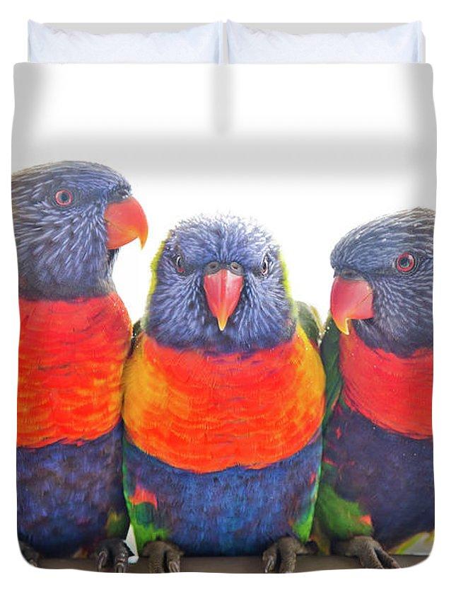 Rainbow Lorikeet Duvet Covers