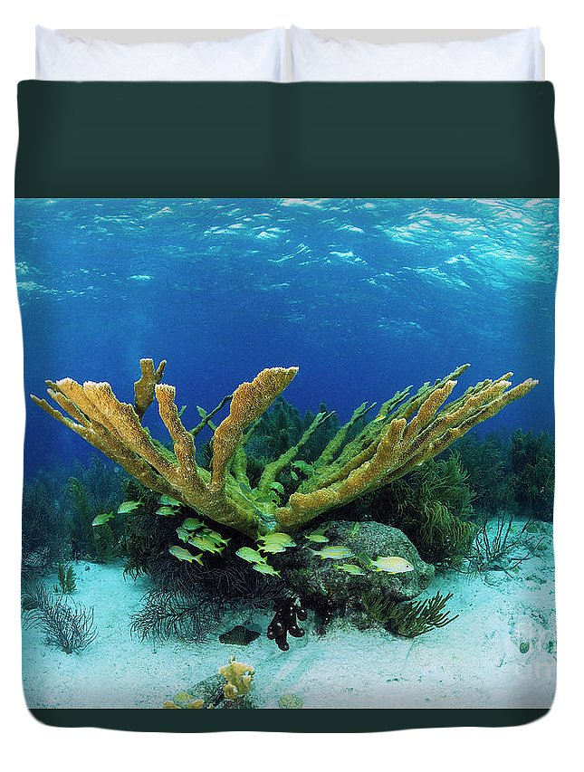 70007084 Duvet Cover featuring the photograph Elkhorn Coral by Hans Leijnse