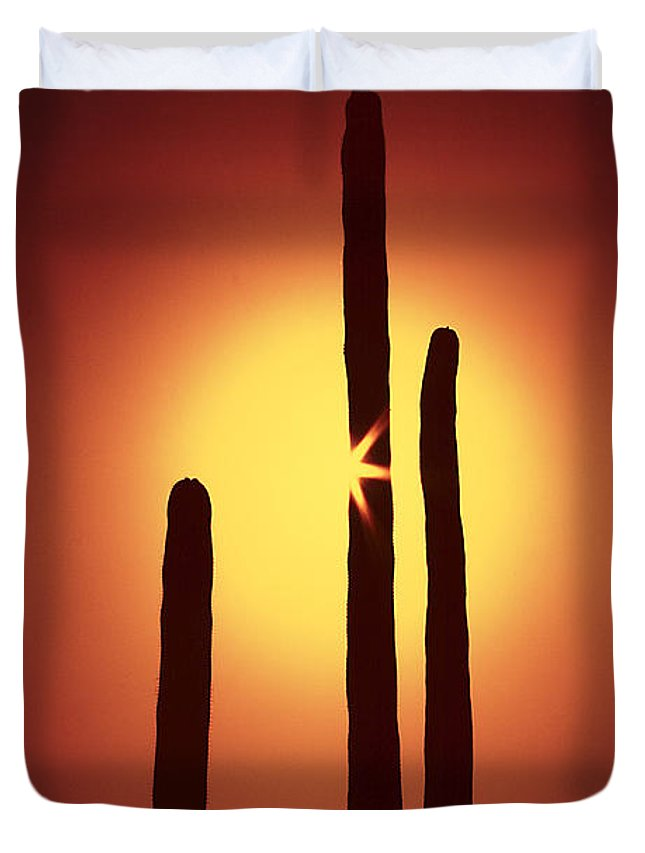 Sun Duvet Cover featuring the photograph Encinitas Cactus by Andre Aleksis