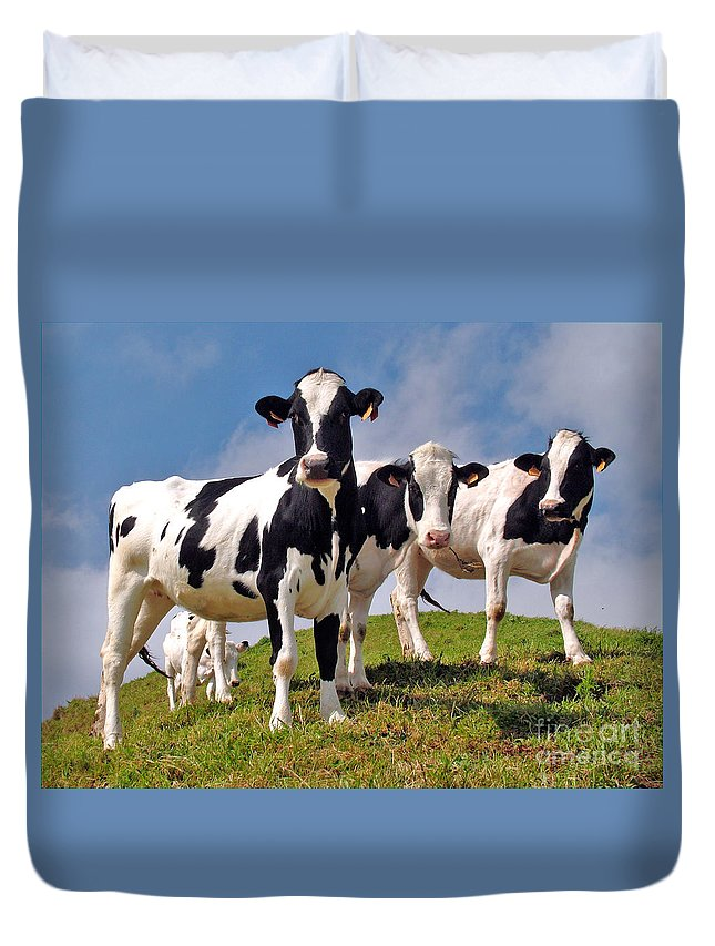 Cow Duvet Covers