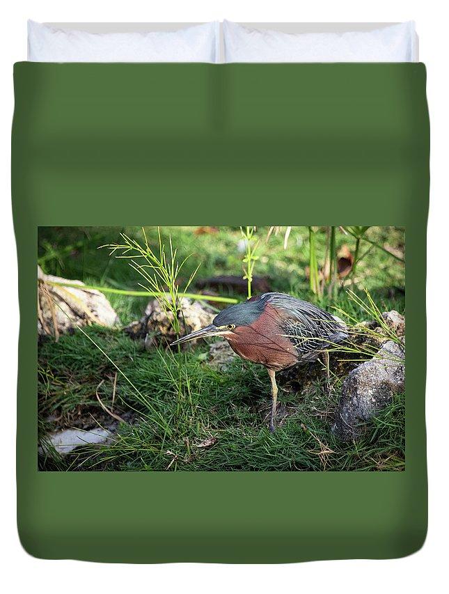 Green Duvet Cover featuring the photograph Green Heron by Eden Watt