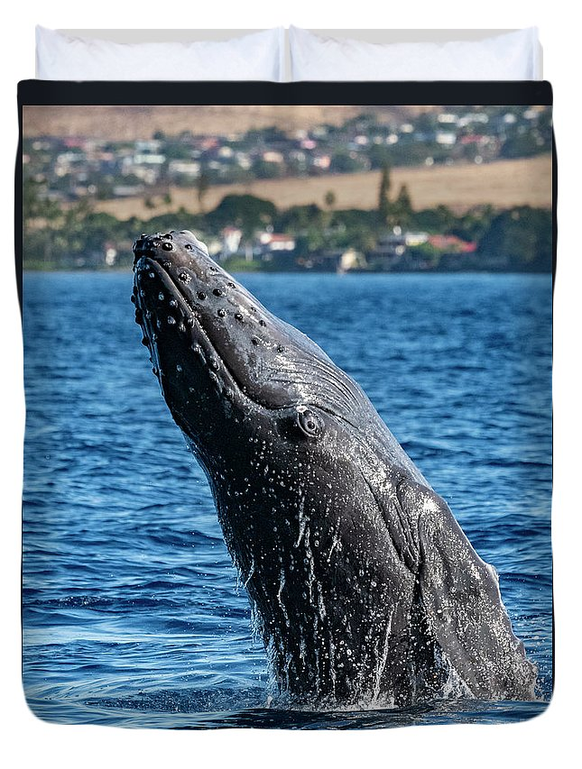 00595515 Duvet Cover featuring the photograph Juvenlie Humpback Breaching by Flip Nicklin