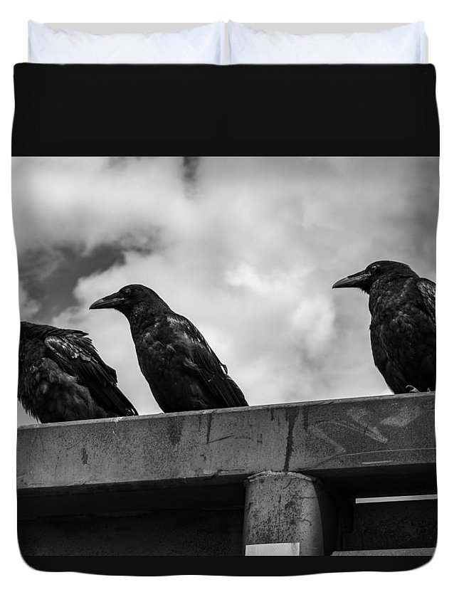 Three Duvet Cover featuring the photograph Three Crows 2 by Damon Dulewich