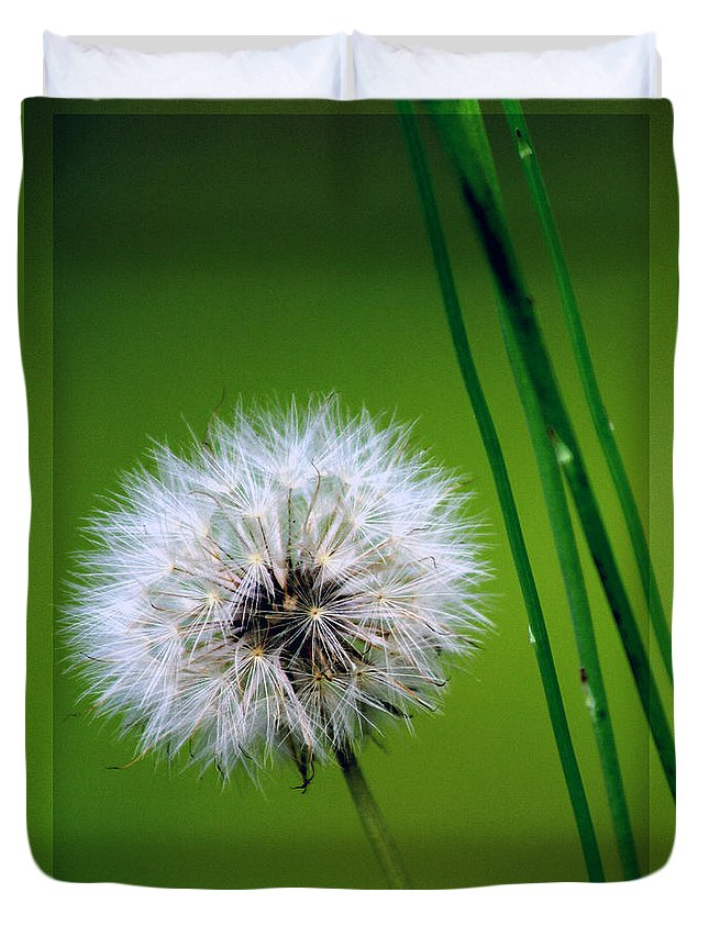 Dandelion Duvet Cover featuring the photograph Waiting for the Winds of Deliverance by Holly Kempe