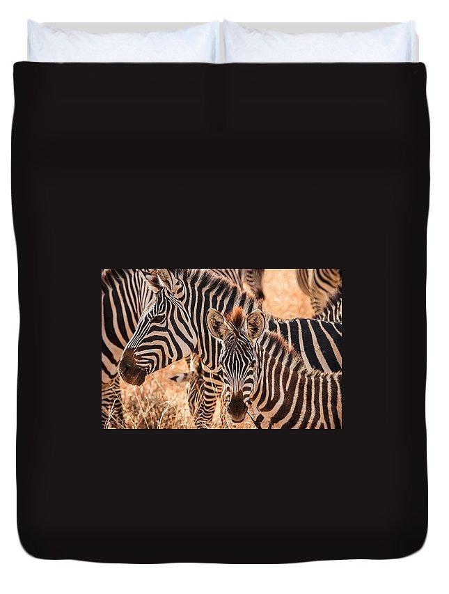 3scape Duvet Cover featuring the photograph Zebras by Adam Romanowicz