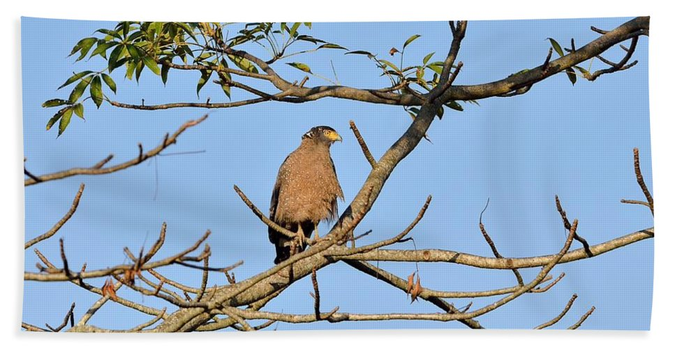 Spilornis Cheela Cheela Hand Towel featuring the photograph Crested Serpent Eagle by Fotosas Photography