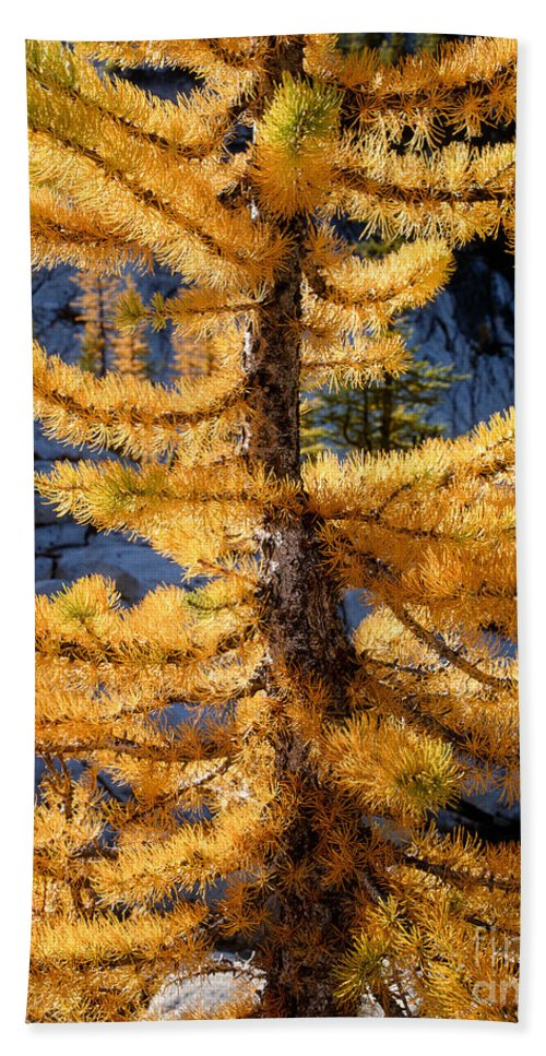 Fall Hand Towel featuring the photograph Larch Tree Closeup by Tracy Knauer