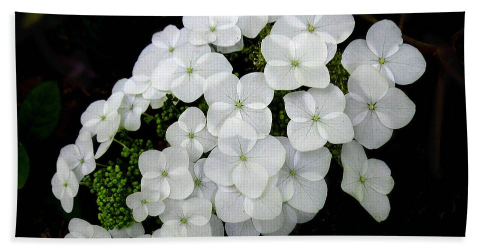 Hydrangea Quercifolia Hand Towel featuring the photograph Oak Leaf Hydrangea by William Tanneberger