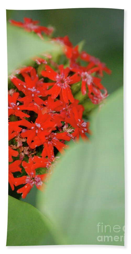 First Star Art Bath Sheet featuring the photograph Red Butterfly Buds By Jammer by First Star Art