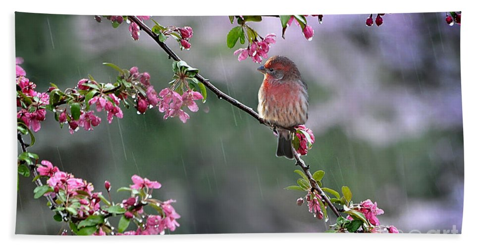 Nature Hand Towel featuring the photograph Singing In The Rain 2  by Nava Thompson