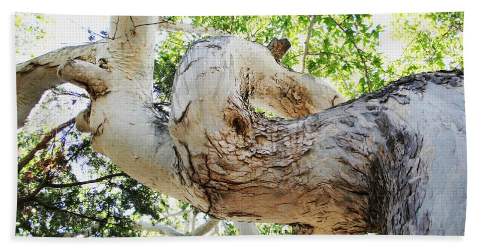 Sycamore Tree's Twisted Trunk Hand Towel featuring the photograph Sycamore Tree's Twisted Trunk by Tom Janca