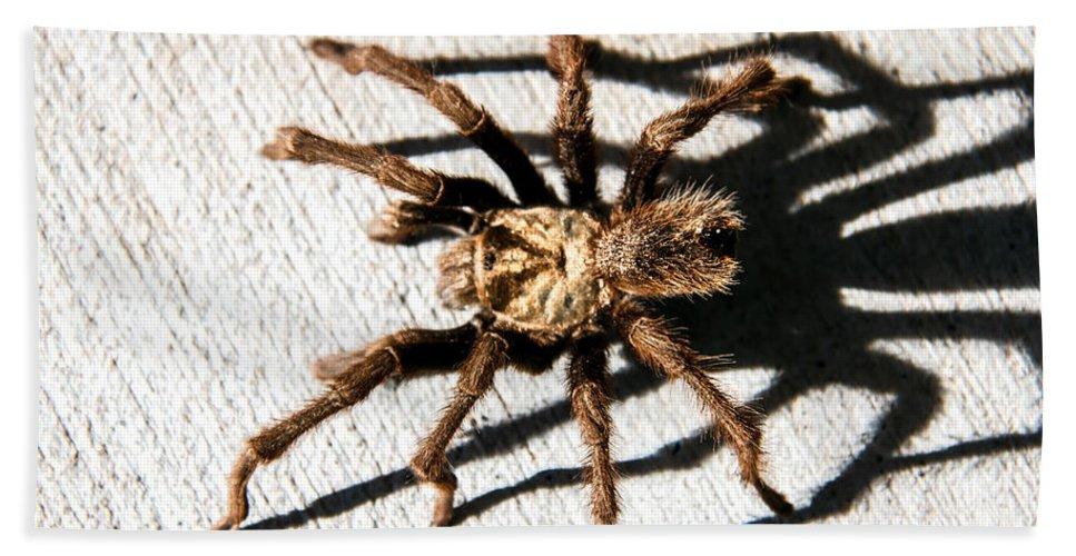 Aphonopelma Hentzi Hand Towel featuring the photograph Tarantula by Robert Bales