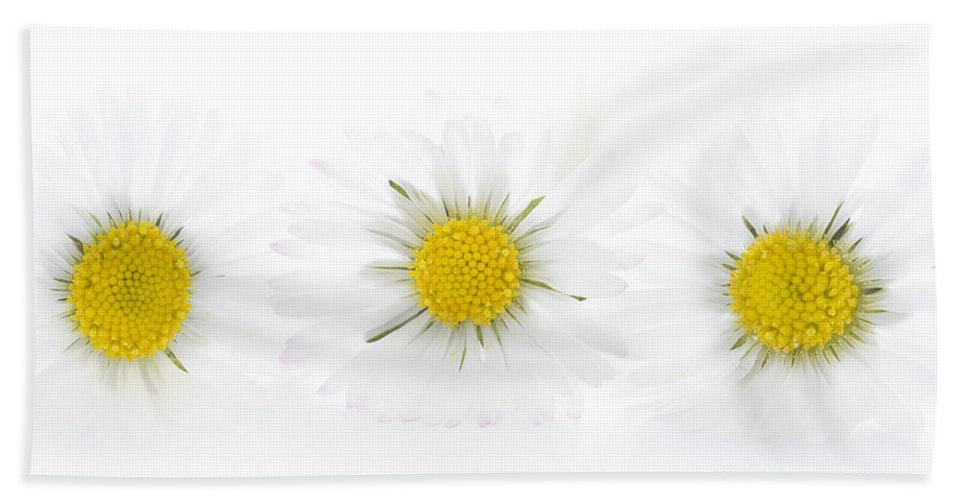 Daisy Hand Towel featuring the photograph Three Daisies On A White Background by Lee Avison