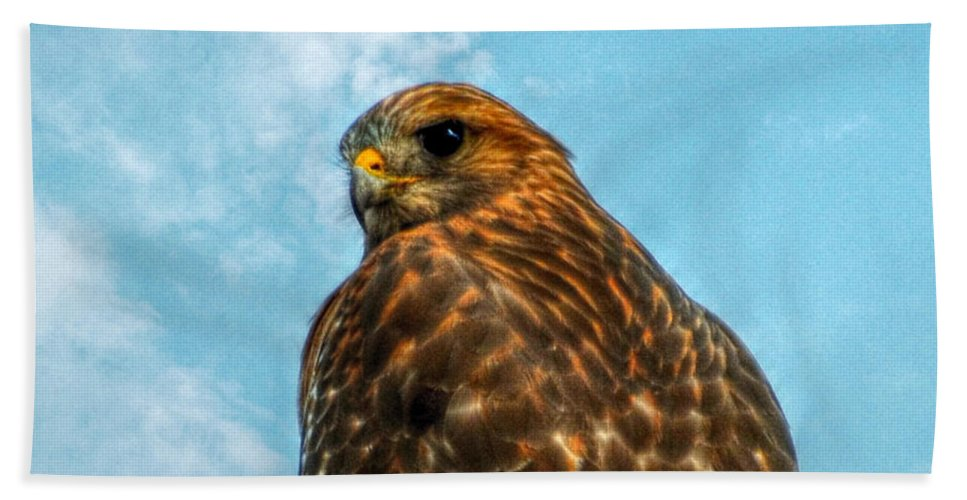Landscape Bath Sheet featuring the photograph What Are You Looking At Red Shoulder Hawk by Peggy Franz