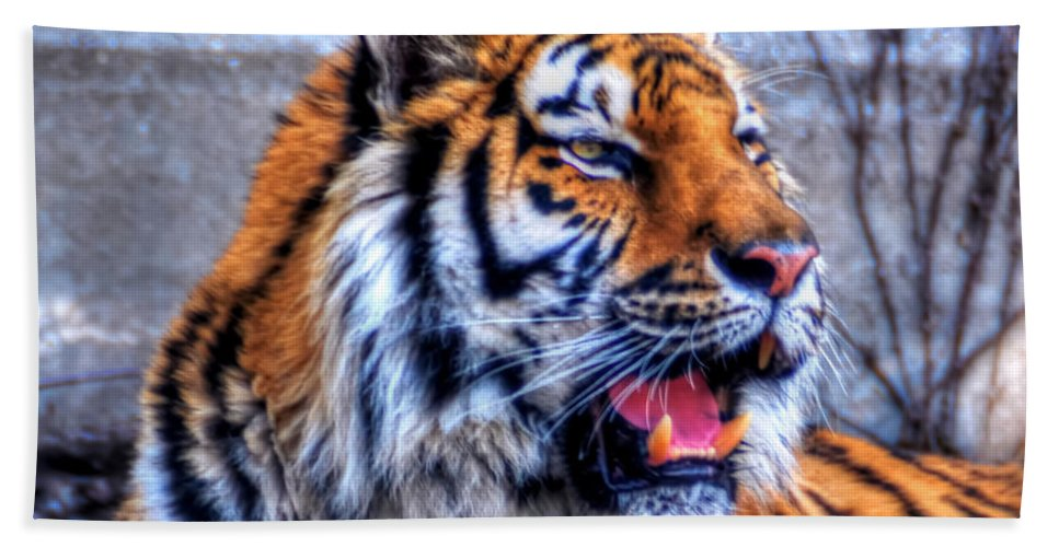 Animals Bath Sheet featuring the photograph 001 Siberian Tiger by Michael Frank Jr