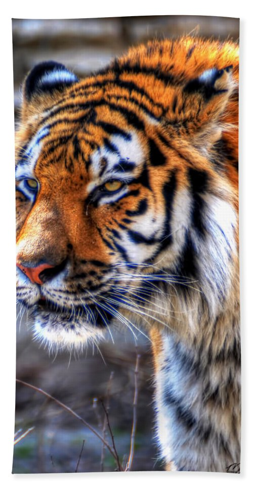 Animals Bath Sheet featuring the photograph 0013 Siberian Tiger by Michael Frank Jr
