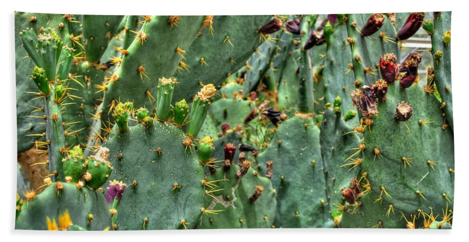 Buffalo Botanical Gardens Hand Towel featuring the photograph 002 For The Cactus Lover In You Buffalo Botanical Gardens Series by Michael Frank Jr