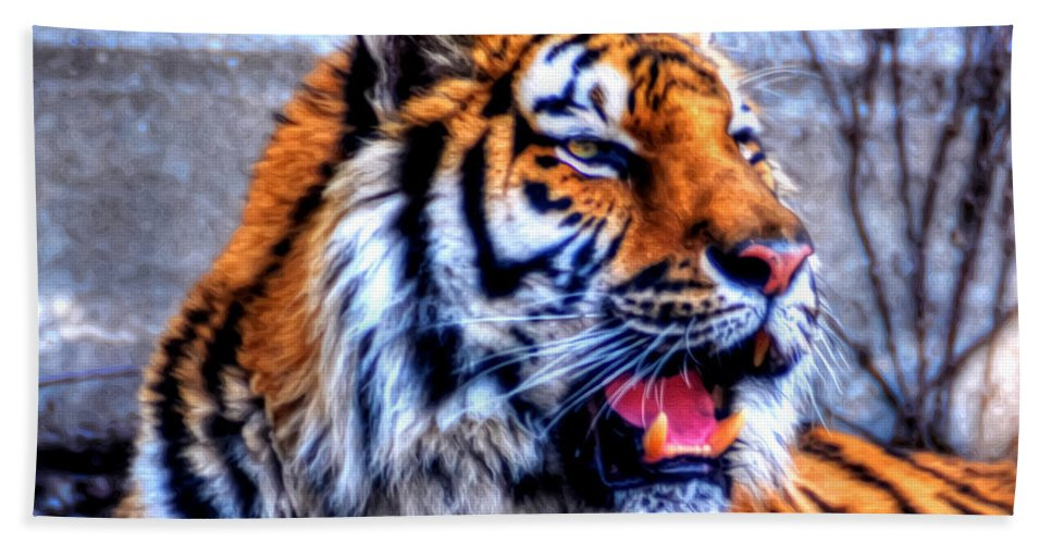 Animals Bath Sheet featuring the photograph 002 Siberian Tiger by Michael Frank Jr