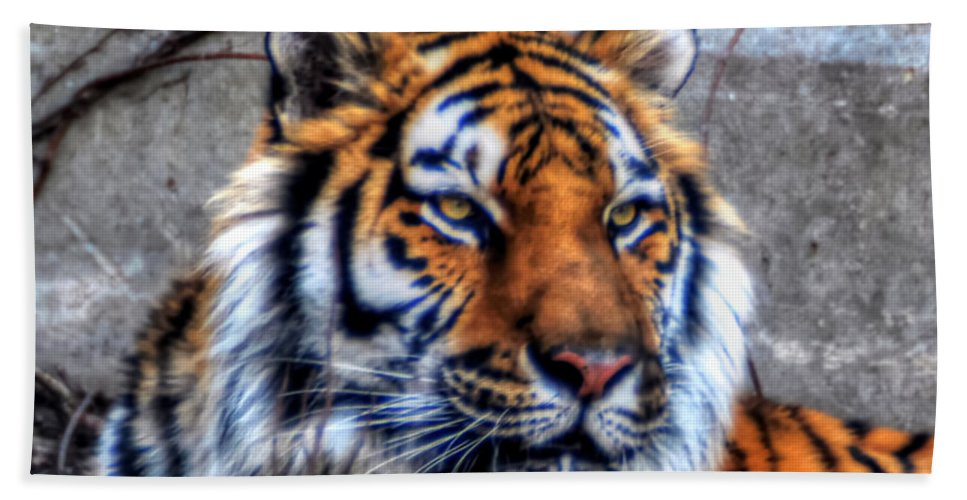 Animals Bath Sheet featuring the photograph 004 Siberian Tiger by Michael Frank Jr