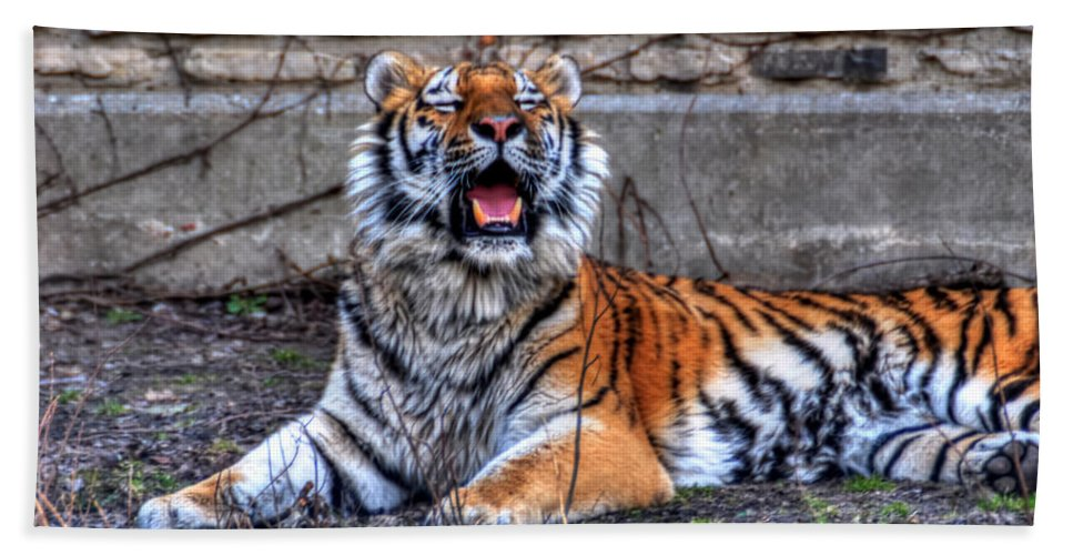 Animals Bath Sheet featuring the photograph 007 Siberian Tiger by Michael Frank Jr