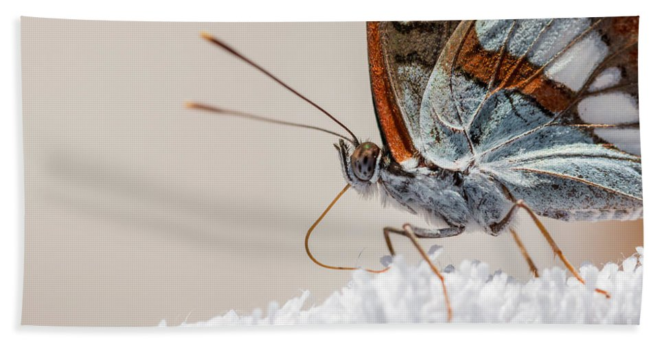 Limenitis Reducta Bath Sheet featuring the photograph 01 Southern White Admiral Butterfly Close Up by Jivko Nakev