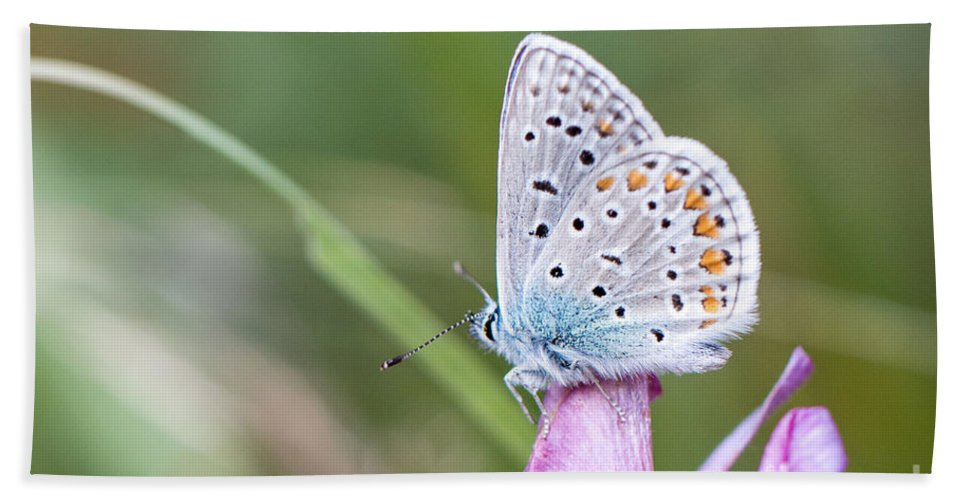 Common Blue Butterfly Bath Sheet featuring the photograph 02 Common Blue Butterfly by Jivko Nakev