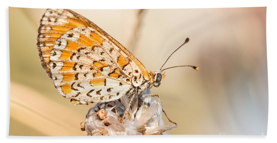 Lesser Spotted Fritillary Bath Sheet featuring the photograph 03 Lesser Spotted Fritillary by Jivko Nakev