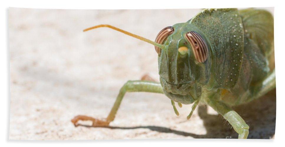 Anacridium Aegypticum Bath Sheet featuring the photograph 04 Egyptian Locust Grasshopper by Jivko Nakev