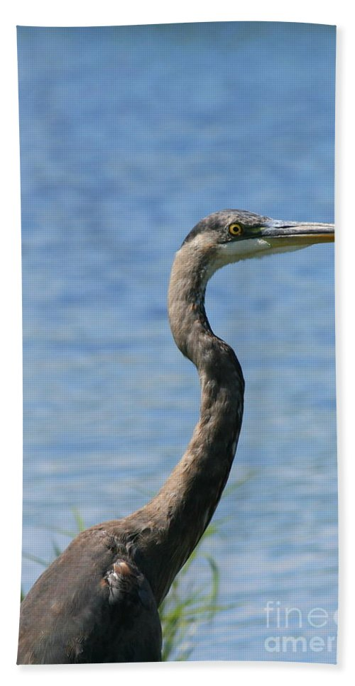 Heron Bath Sheet featuring the photograph A Portrait Of A Great Blue Heron by Neal Eslinger