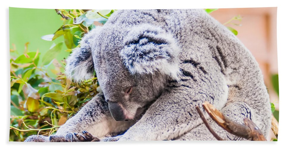 Koala Hand Towel featuring the photograph Adorable Koala Bear Taking A Nap Sleeping On A Tree by Alex Grichenko