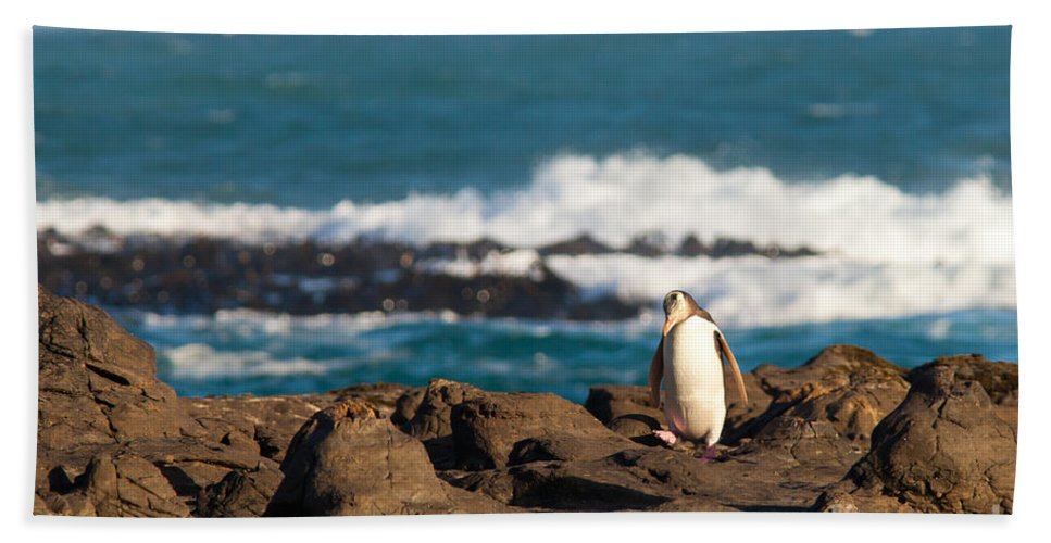 South Island Bath Sheet featuring the photograph Adult Nz Yellow-eyed Penguin Or Hoiho On Shore by Stephan Pietzko