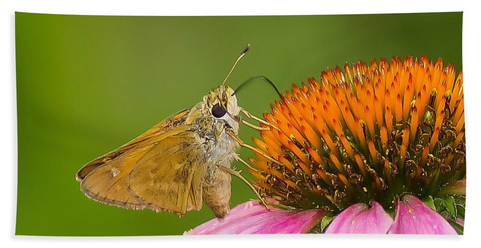Flowers & Plants Bath Sheet featuring the photograph All Things Big And Small by Daren Johnson