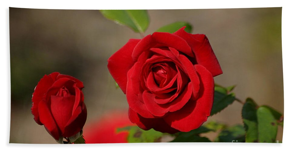Red Roses Bath Sheet featuring the photograph All You Need Is Love by Living Color Photography Lorraine Lynch