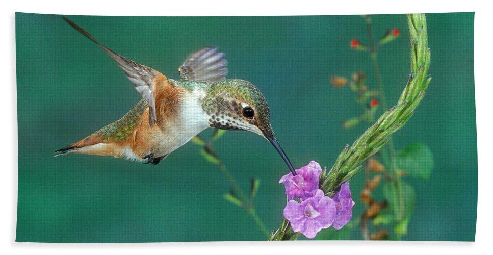 Allen's Hummingbird Hand Towel featuring the photograph Allens Hummingbird by Anthony Mercieca