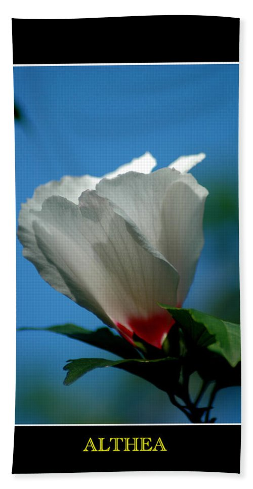 Plant Hand Towel featuring the photograph Althea Flower by David Weeks