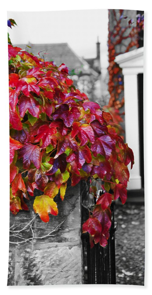 Red Hand Towel featuring the photograph Autumn Ivy by Hal Halli