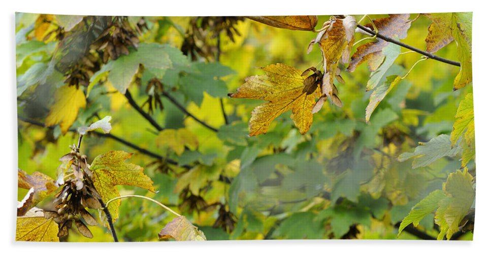 Tree Bath Sheet featuring the photograph Autumn Leaves by Guido Montanes Castillo