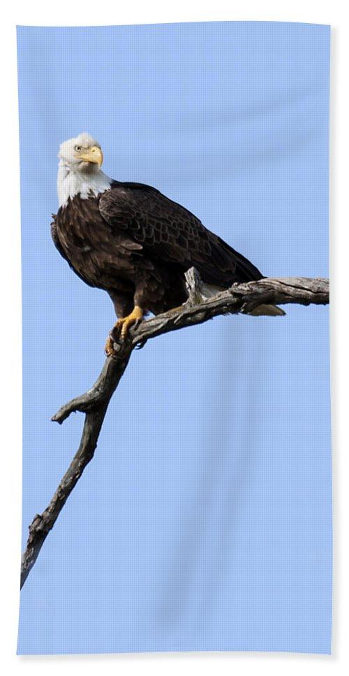 Eagle Bath Sheet featuring the photograph Bald Eagle 7 by David Lester