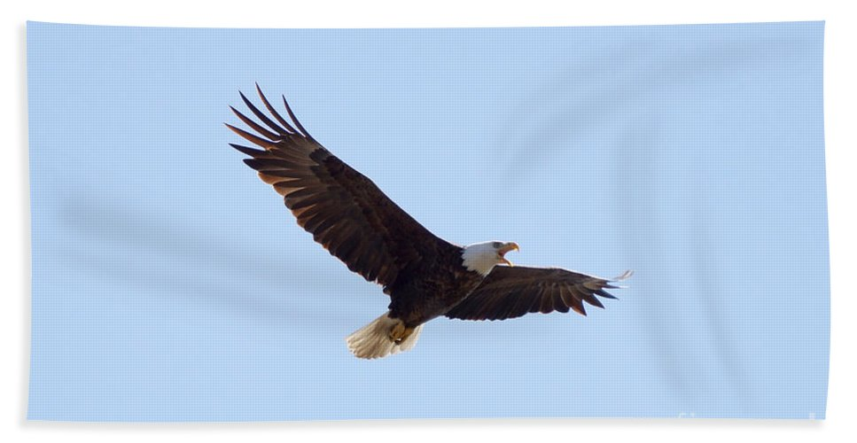 Eagle Hand Towel featuring the photograph Bald Eagle Calling by Lori Tordsen
