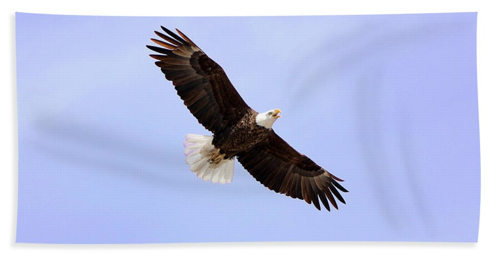 Merlin Hand Towel featuring the photograph Bald Eagles by Lori Tordsen